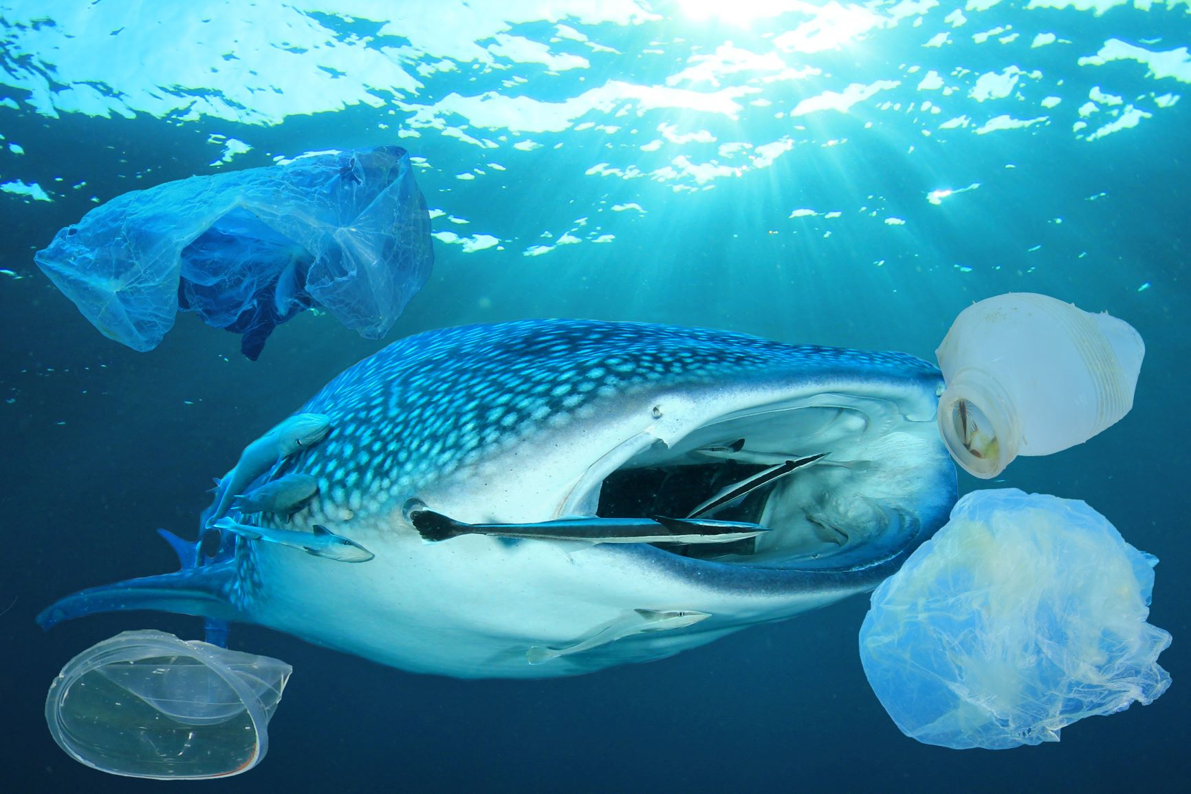 This Is Why You Should Care That Whale Sharks Eat